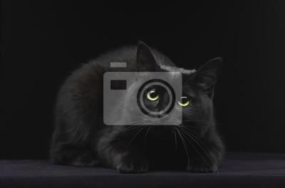 Tapeta Czarny Kot Z Zielonymi Oczami Czarny Kobieta Zwierzęcy