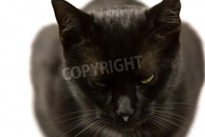 Tapeta Czarny Kot Z Zielonymi Oczami żółto Koncentrują Się Na Oczy