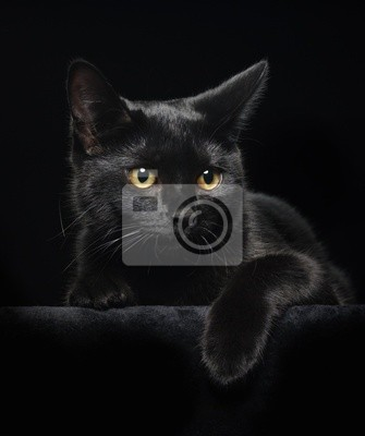 Tapeta Czarny Kot Z żółte Oczy żółty Czarny Zbliżenie Redropl