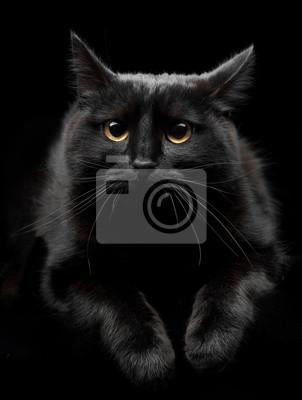 Tapeta Czarny Kot Z żółtymi Oczami żółty Czarny Kobieta Redropl