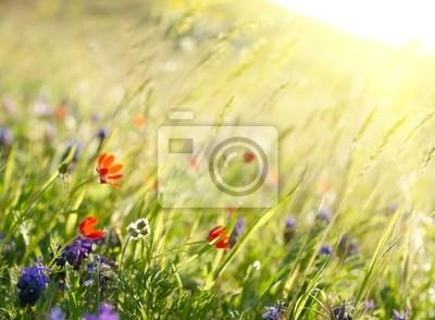 Czerwone kwiaty, pole z zielonych roślin. Shallow DOF