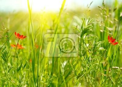Czerwone kwiaty uprawy polowe z zielonymi
