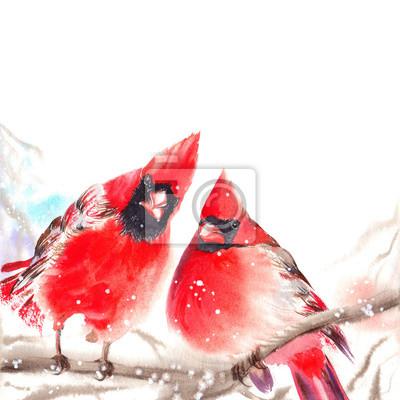 Tapeta Czerwoni północni kardynał ptaki siedzi na gałąź. Akwarela ilustracja na białym tle.