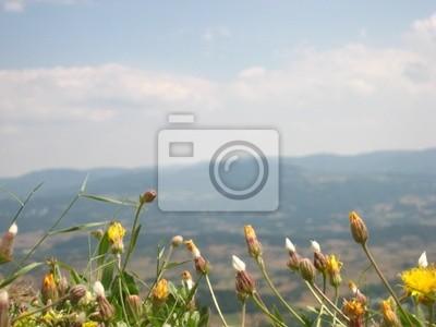 Daleki widok z kwiatów polnych
