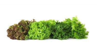 Tapeta Different sorts of lettuce on white background