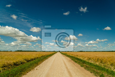 Dirt road surrounded by agricultural fields with nice blue sky in background
