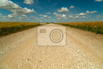 Dirt road surrounded by agricultural fields with nice blue sky in background - low angle shot