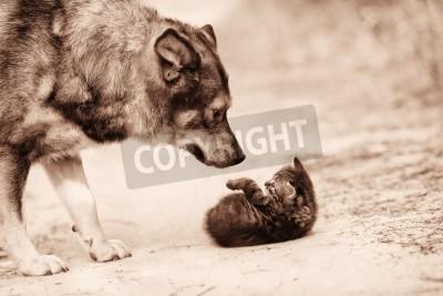 Duży pies bezpański kotek spotkanie Monochromatyczny colorCorrection