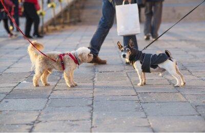 dwa psy na spacerze spotkań