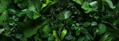 Tapeta Green leaves as background