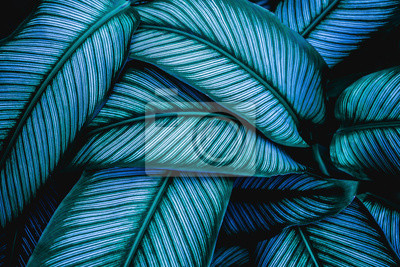 Tapeta green leaves nature  background, closeup leaves texture, tropical leaves