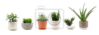 Tapeta Grupa różnorodni salowi kaktusy i sukulent rośliny w garnkach odizolowywających na białym tle