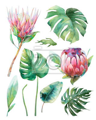 Tapeta Hand painted tropical floral elements set. Watercolor botanical illustration of exotic flowersand leaves. Protea and monstera isolated on white background
