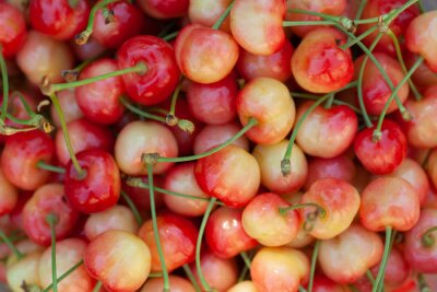 juicy yellow homemade sweet cherry from the garden