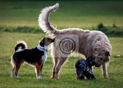 Kilka psów spotkać w parku