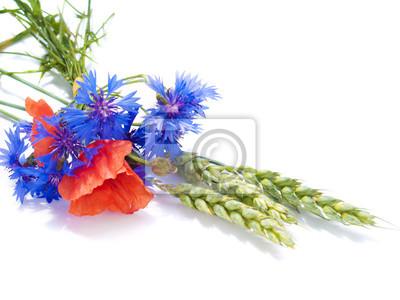 kłosy z pola kwiatów