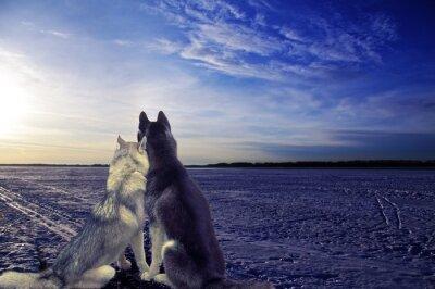 Kochankowie - dwa psy spełniają słońca