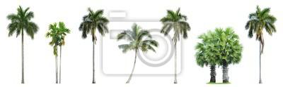 Tapeta Kolekcja drzewka palmowe na białym tle