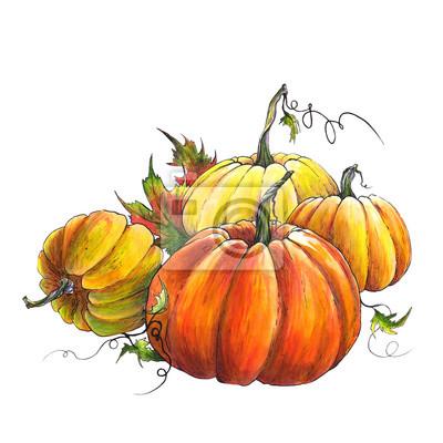 Tapeta Kolekcja dyni. Kolorowa jesieni ilustracja na białym tle.