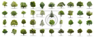Tapeta Kolekcja wysokiej rozdzielczości Drzewo samodzielnie na białym tle