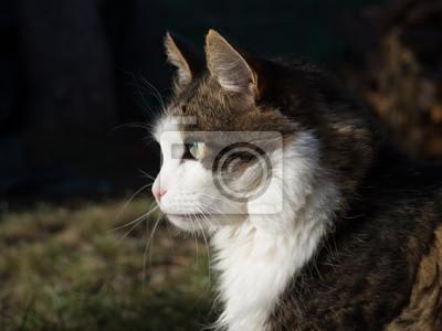Tapeta Kot Kot Zwierzęcy Pieszczoch Redropl