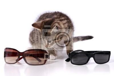 Tapeta Kot Patrząc Z Okulary Czarny Wyborczy Nowoczesny Redropl