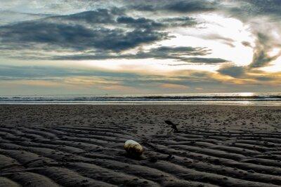 Kotwice w piaszczystej plaży i porannym słońcu.