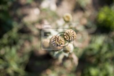 Kwiat pole