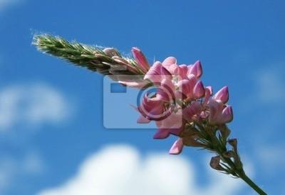 Kwiat pole i niebo