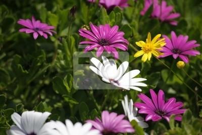 Kwiaty pól