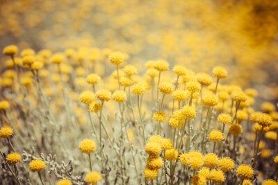 Kwiaty polne / jaskier. żółty kwiat / wiosna tle