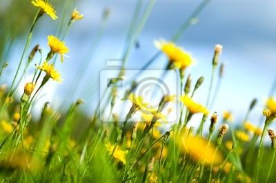 Kwiaty polne (płytkie DOF)