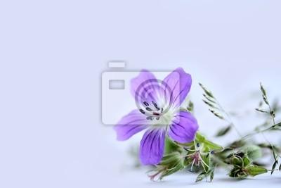 lilac flower field