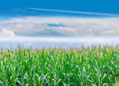 Miękka ostrości powierzchni tekstura kukurydzany plantaci pole z niebieskie niebo chmurą, Tajlandia Fuji góry tło.