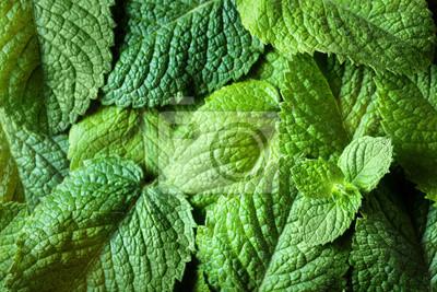 Tapeta Mint leaves background.