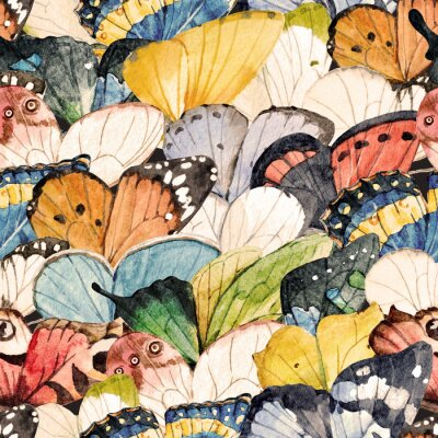 Tapeta Motyl kolorowy wzór