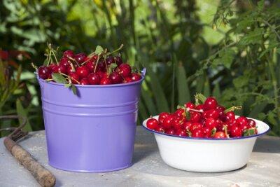 Mucket metalowe i białe emaliowane miski wypełnione świeżo pobrane wiśni z ogrodu