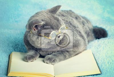 Tapeta Niebieski Kot Brytyjski Nosi Okulary Leżące Na Książki