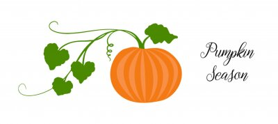 Tapeta Orange pumpkin, halloween design, fall or autumn pumpkin illustration with green vine leaves and orange gourd. October harvest season vector, farm vegetable that is healthy and nutritious