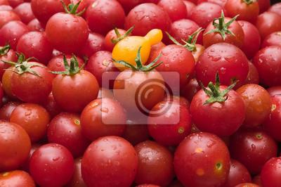Organic Cherry pomidorów świeżo pobrane z ogrodu