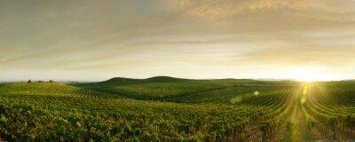 Tapeta outdoor winogron