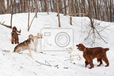 Pięć psów spotkanie