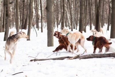 Pięć spotkań psy