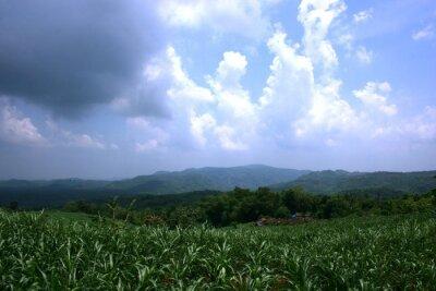 Piękne pole roślin kukurydzy z ładnym ciemnym niebieskim niebie