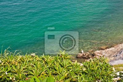 Tapeta Piękne wybrzeże z drzew w Tajlandii