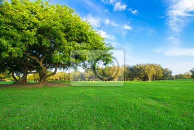 Piękne zielone pole golfowe z nieba i masywnym drzewem zielonym