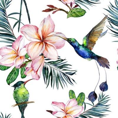 Tapeta Piękny kolorowy colibri i menchii plumeria kwitnie na białym tle. Egzotyczny tropikalny wzór. Malarstwo Watecolor. Ręcznie malowane ilustracji.
