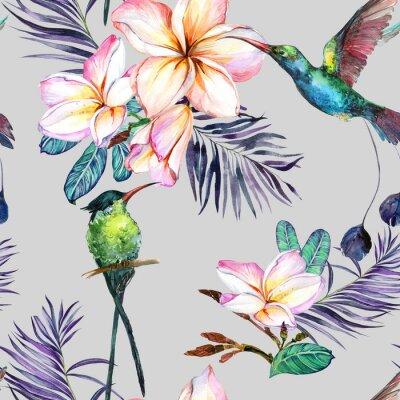 Tapeta Piękny kolorowy colibri i plumeria kwitniemy na popielatym tle. Egzotyczny tropikalny wzór. Malarstwo Watecolor. Ręcznie malowane ilustracji.