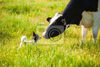 Pies spełnia krowy na wsi