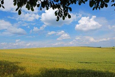 Pole pszenicy z Nicei b ?? kitne niebo